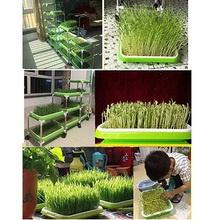 Double-Layer Plant Nursery boxs Hydroponics Tray Seed Sprout Plate Plant Germination Tray Grow Box Vegetable Seeding Tray Case