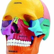 Стоматологическая лаборатория Golbe 4D мастер Анатомия головы человека медицинская Анатомия красочные дидактические взрыва череп модель скелета