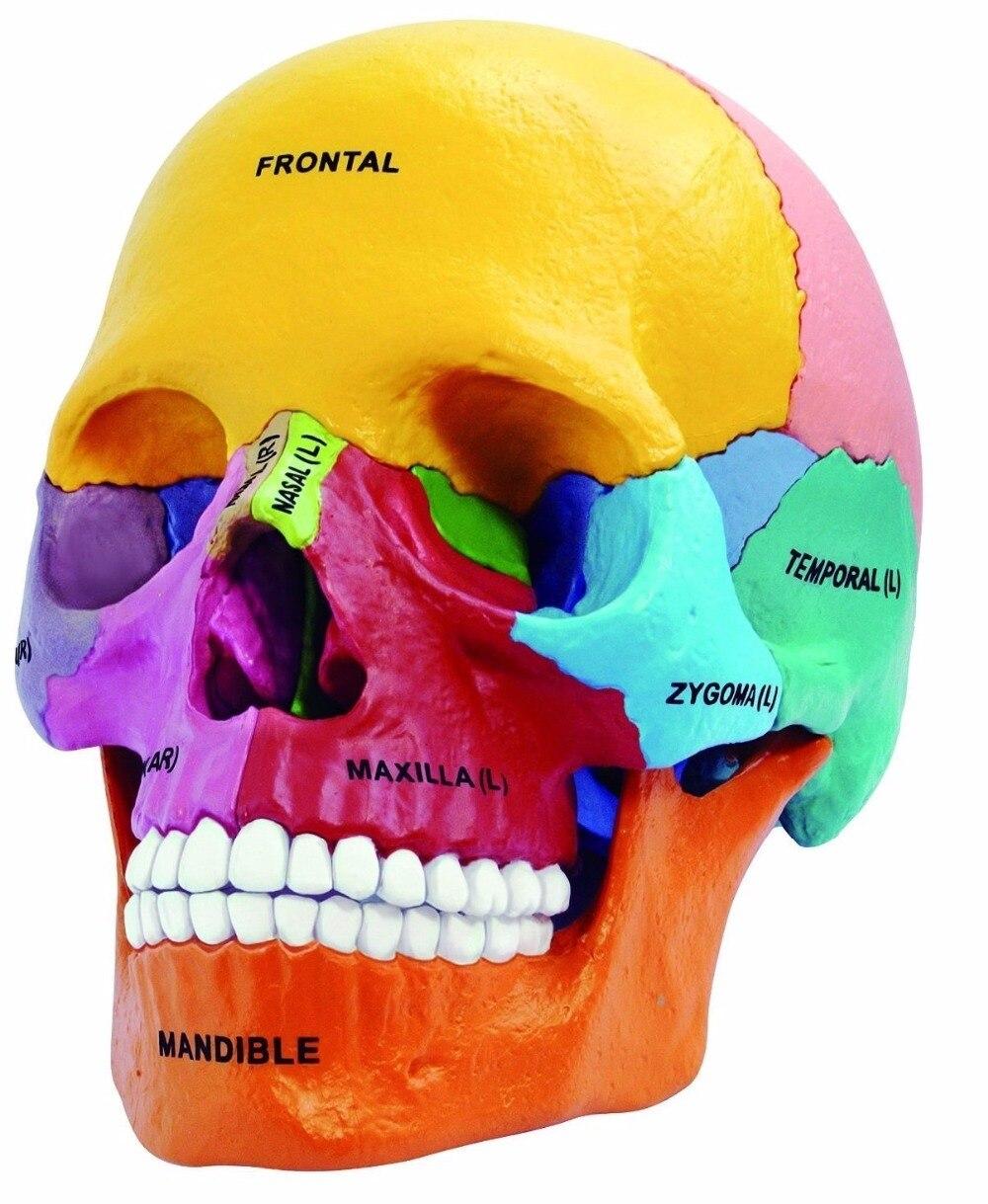 Aliexpress.com: Comprar Laboratorio Dental golbe 4d maestro cabeza ...