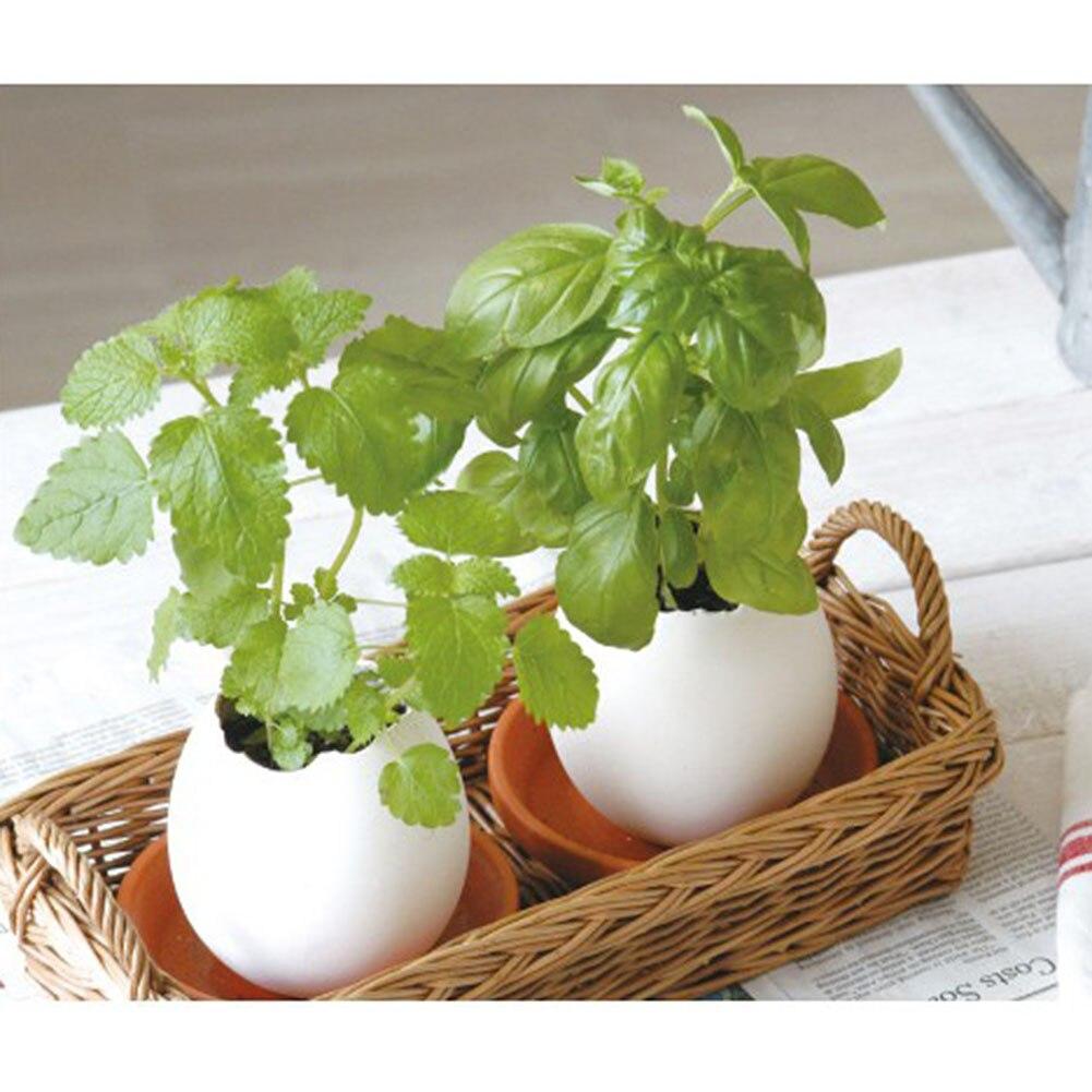 3pcs/set Creative Bonsai DIY Mini Lucky Egg Potted Plant Office Home Desktop Garden Pots Planters Nice Decoration