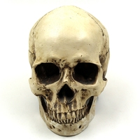 Human Skull Resin Replica Medical Model Lifesize 1:1 Halloween Home Decoration High Quality Decorative Craft Skull With Box
