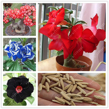 100% True Adenium Obesum Seeds Desert Rose Seeds Garden Home Bonsai Balcony Flower seeds 2 pcs/bag(China)