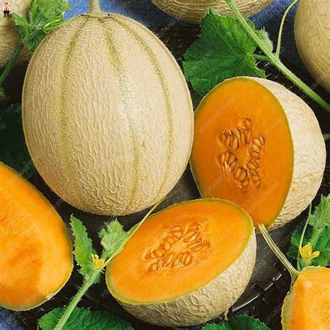20Pcs Original Cantaloupe Melon bonsai plants Fresh Superior Honey Hami Melon Planting fruit Delicious plantas para jardin