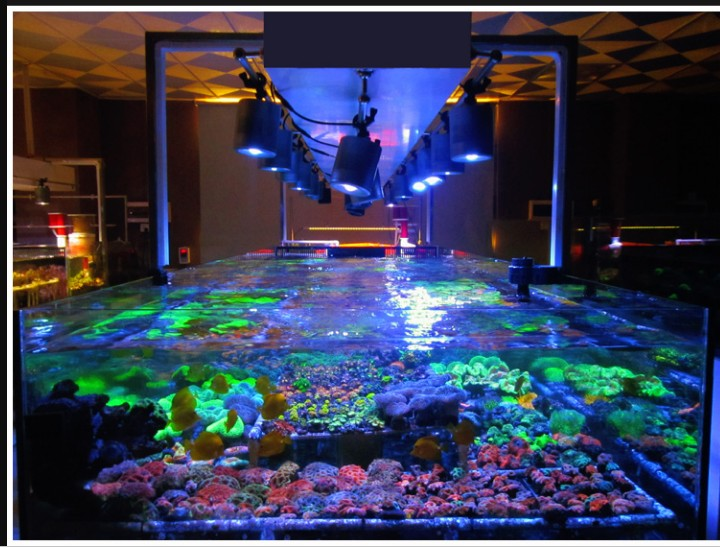 30W 70W Aquarium Marine Led Light For Coral With White Blue Color Have Timer Function To Simulate Sunrise And Sunset