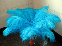 Wholesale natural Hard rod 100pcs/lot Sky Blue Ostrich Feathers 25 30cm / 10 12 Wedding Birthday Christmas Decorations