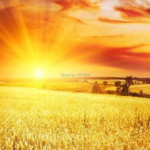 Harvest Wheat Field 8'x8′ CP Computer-painted Scenic Photography Background Photo Studio Backdrop ZJZ-852