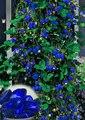 500 unids Azul Escalada semillas de Fresa Semillas de árboles, muy deliciosa Fruta Semillas Para El Hogar y Jardín bonsai semillas, regalos enviados as10 kiwi