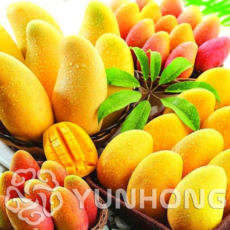 1 PCS Mango Seeds, Mini Mango Seeds, Bonsai Tree Seeds, Organic Fruit and Vegetable Seeds, Home ...
