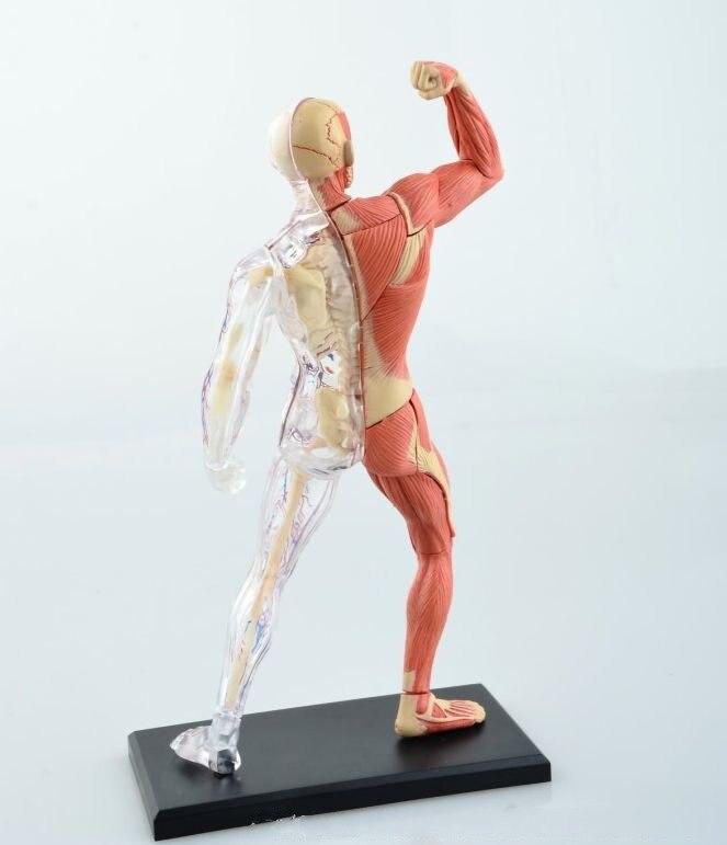 Taping Supertapes Muskel Nerven Faszienschmerzen Download Gallery ...