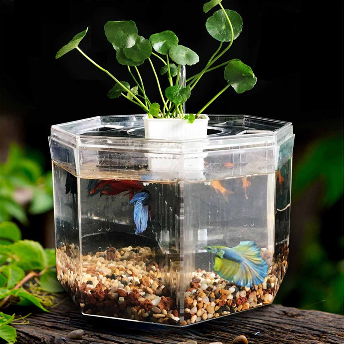 Four-block Mini Betta Fish Tank Desktop Clear Marine Aquaponic Aquarium Fishes Bowl With Water Pump Pumping Pipe Plant Basket