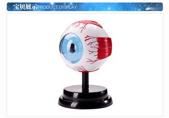 science experiment Human Medicine eye model set  free shipping