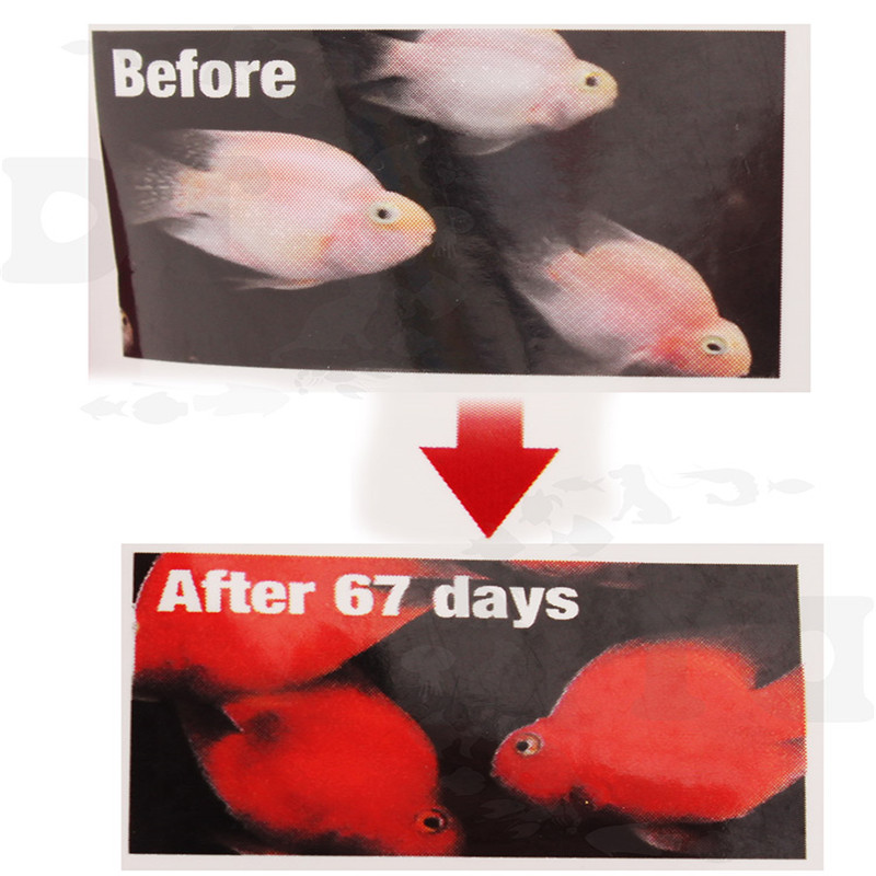 Hikari Fish Food for Blood Red Parrot fish