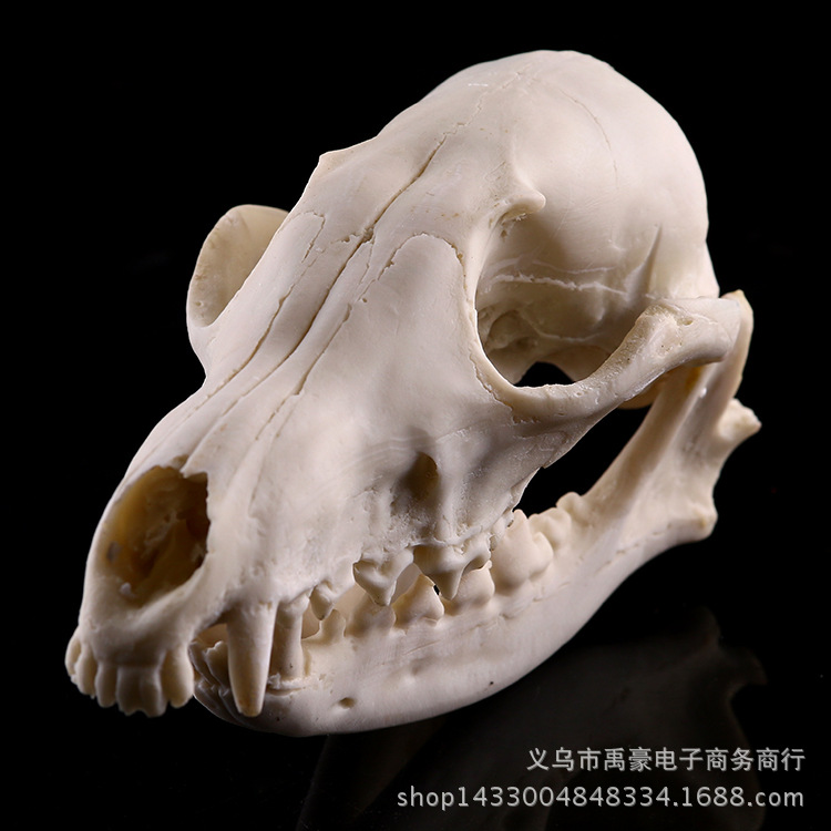 Compare Prices On Fox Skull- Online Shopping/Buy Low Price