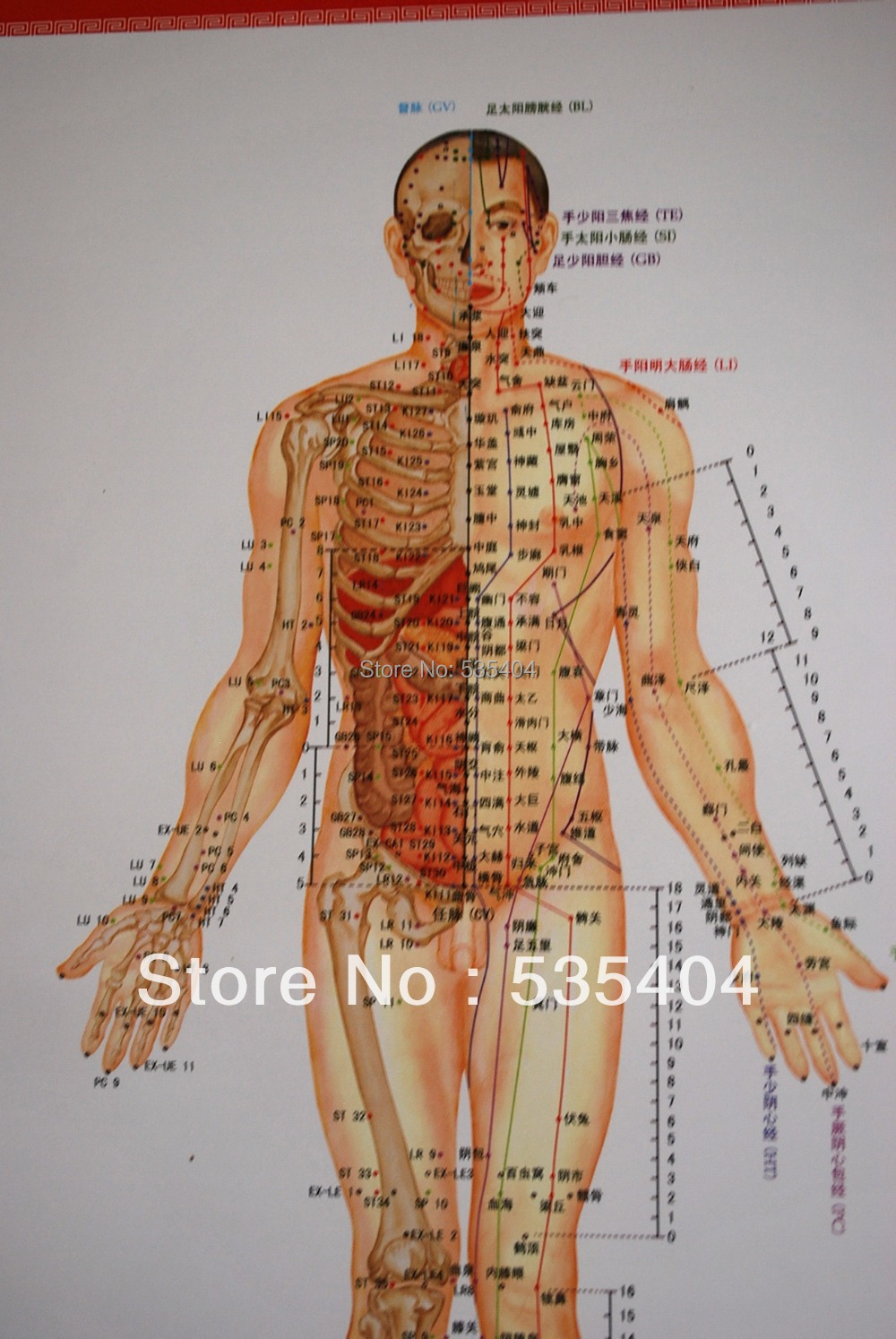 7 Poster Charts Acupuncture Human Body Charts Meridians And
