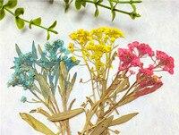 Ngọt ngào alyssum trên Thân Để Cristmas trang trí Báo Chí cho điện thoại di động hoa khô miễn phí giao hàng 1 lot/120 cái