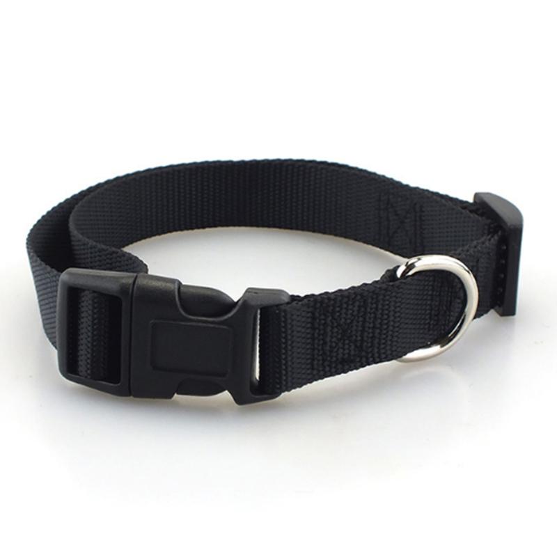 Collar de perro clásico 3