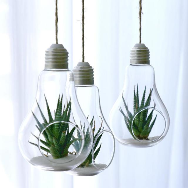 Pack Of Light Bulb Hanging Plant Terrarium Glass Vase Succulent