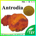 100% Natural Antrodia cinnamomea Extract Supplier