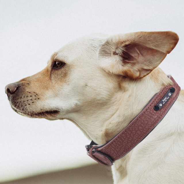 Personalized Dog Collars adjustable Soft Leather Custom Dog Collar Name ID Tags For Cat puppy