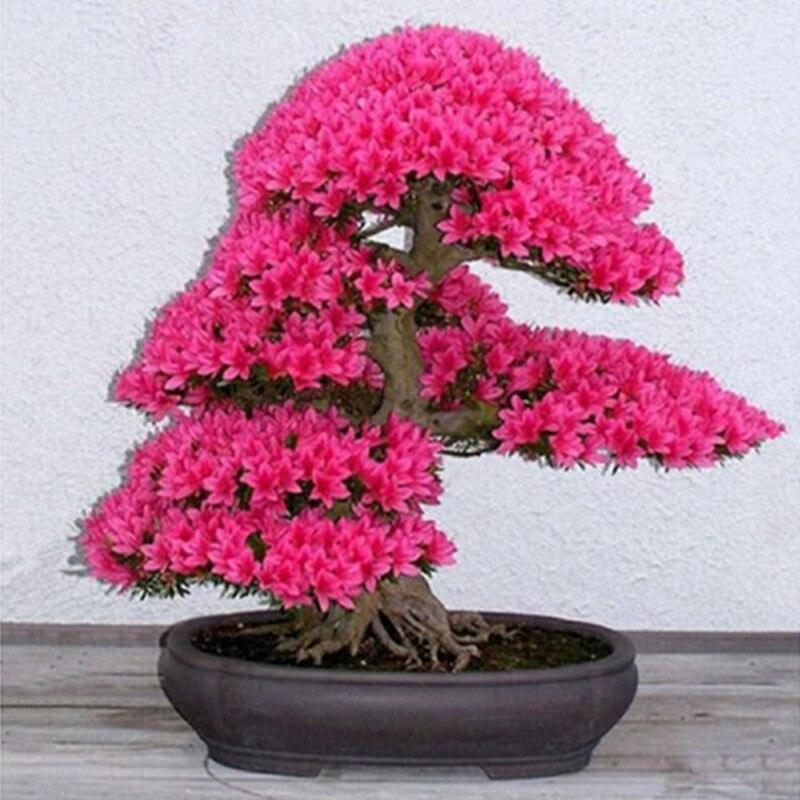 japanischen bonsai baum werbeaktion-shop für werbeaktion, Best garten ideen