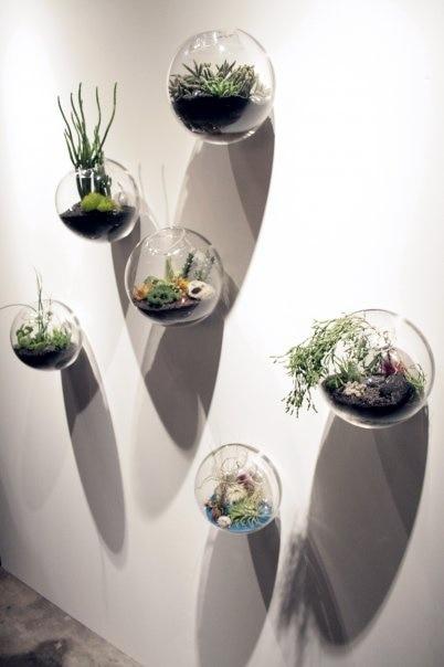 Succulent Plants List Pictures