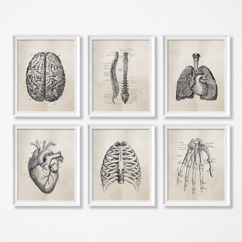 HTB1HGAHX2fsK1RjSszbq6AqBXXaJ Human Anatomy Science Vintage Posters Art Prints , Medical Anatomy Canvas Painting Medical Doctor Clinic Wall Pictures Decor
