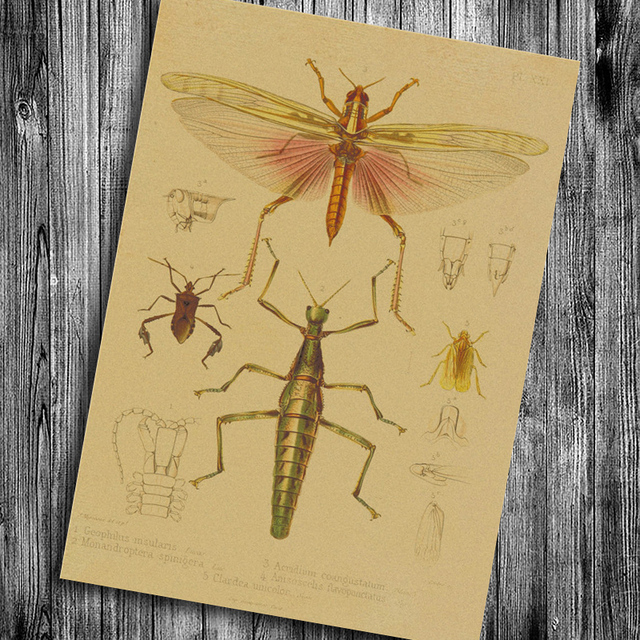 Vintage Insects Poster Dragonfly Cricket Grasshopper Painting Kraft ...