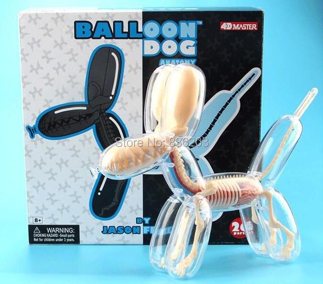 4D maestro visión globo perro anatomía disección cráneo cerebro ...