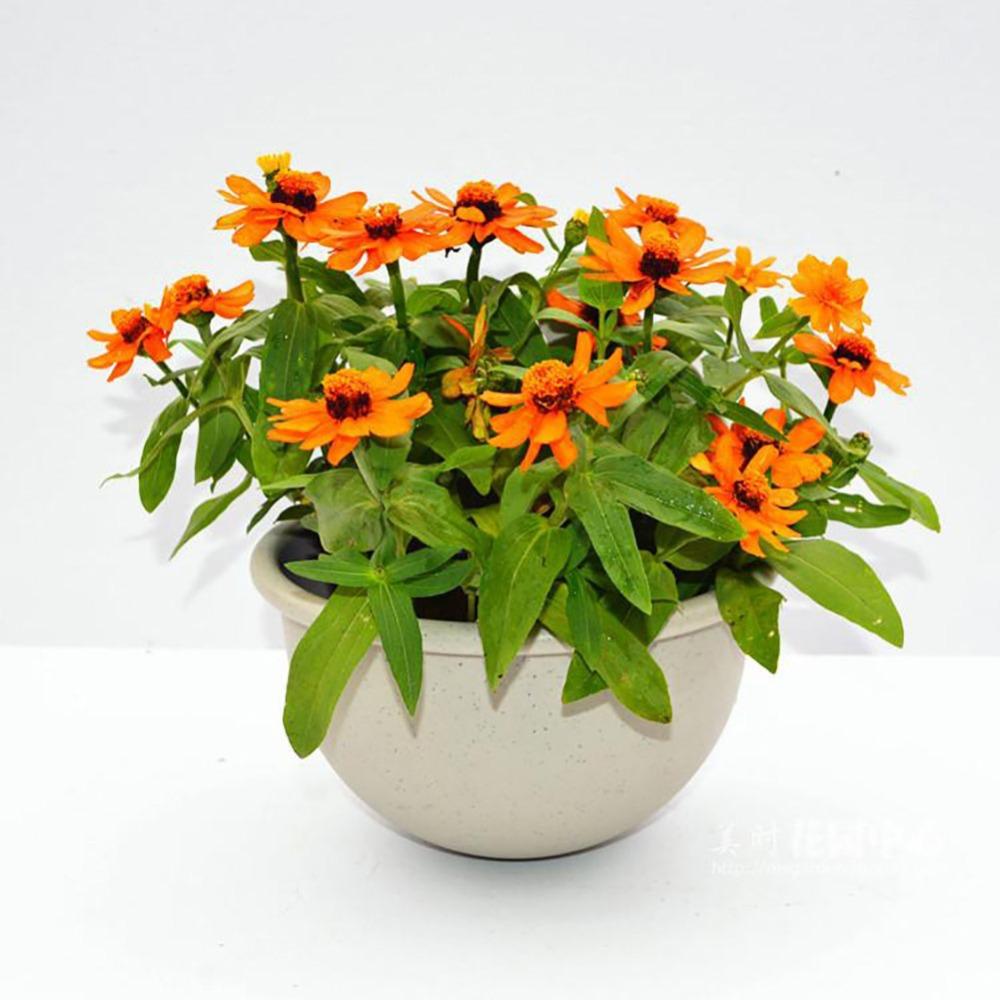 pequeo grande gris mandarina pastoral pared de plstico montado colgante plantador de la flor
