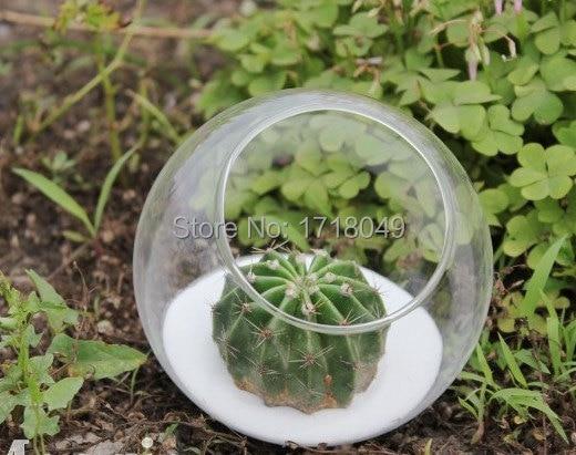4pcs Set Glass Succulent Terrarium Kit With Air Plant Moss Weddding