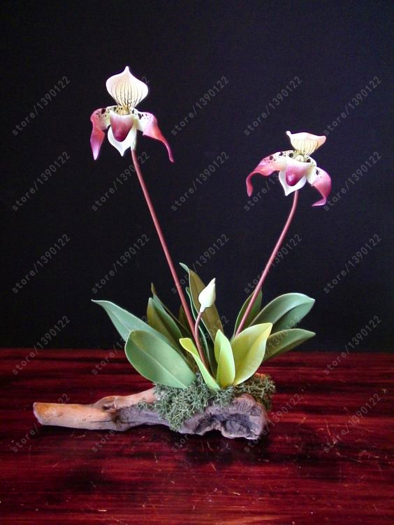 горшки для орхидей бесплатная доставка