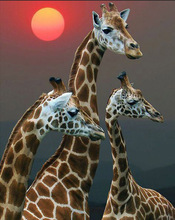 New 5D DIY Diamond Painting Giraffe family  Stones Embroidery Sale Full circular Display Home Decor