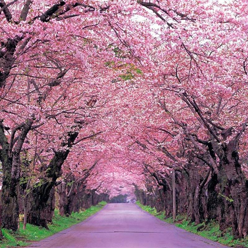 Sakura Seeds Weeping Cherry Tree Seeds 10pcs Pack