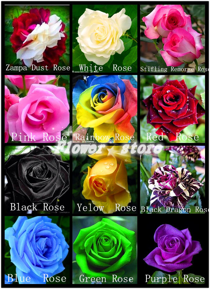 Buy flower pots planters 12 kinds of 600 for Buy rainbow rose seeds