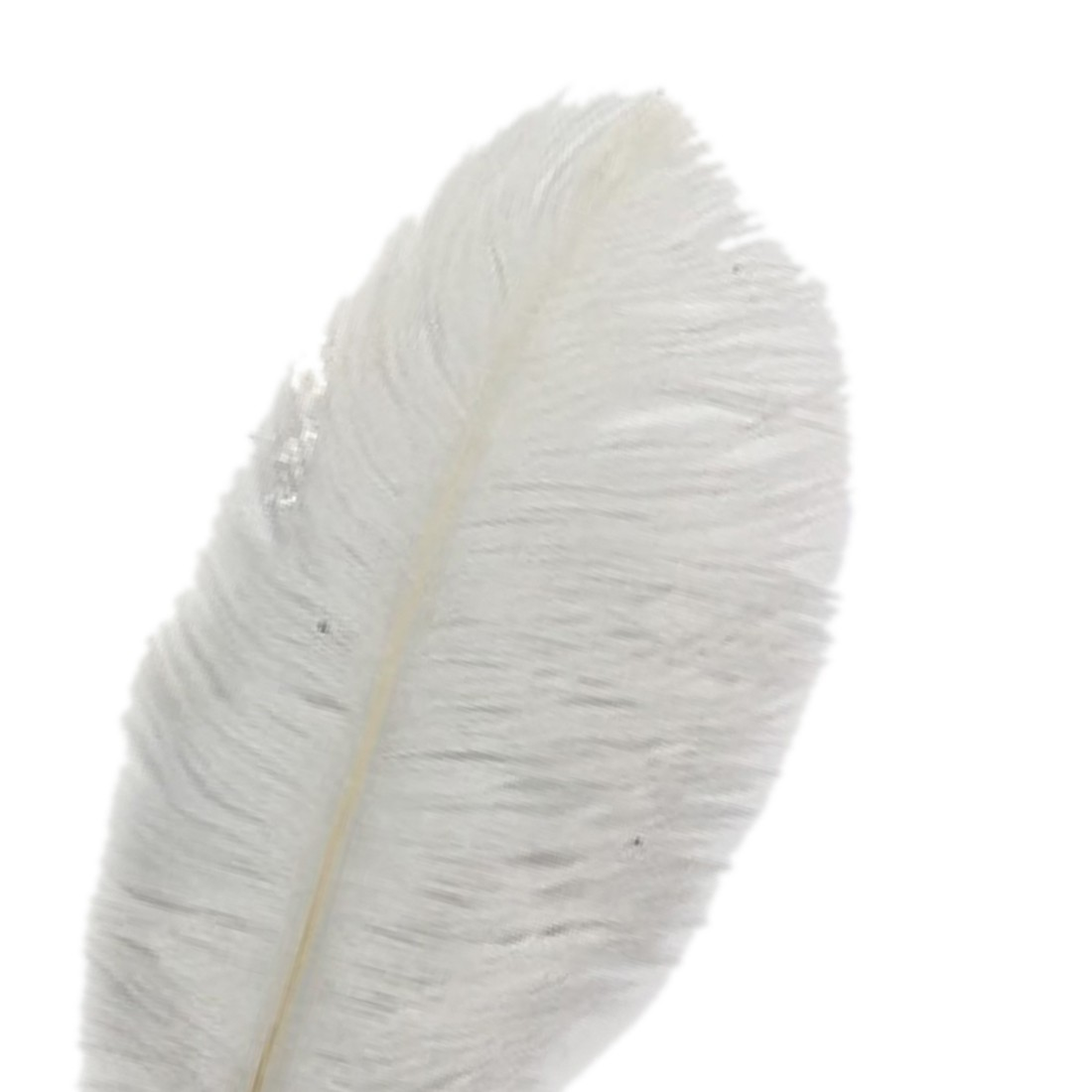 Online Buy Wholesale Ostrich Feather From China Ostrich Feather Wholesalers Aliexpress Com