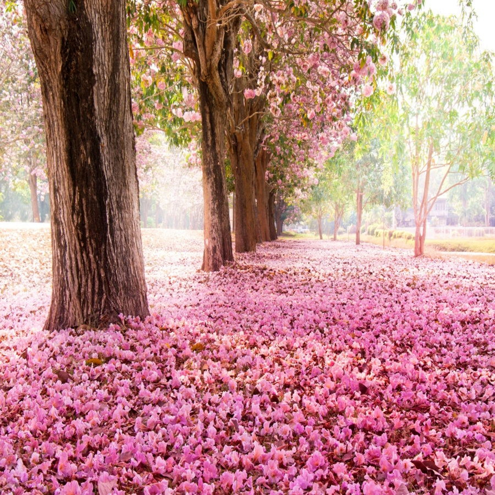 Laeacco Pink Fallen Flowers Trees Romantic Scenery Photography Backgrounds Vinyl Personalized Camera Backdrops For Photo Studio