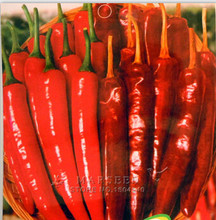 Mixed Pepper Seeds Green Vegetable for DIY Garden Different Kinds to Select Easy to Grow