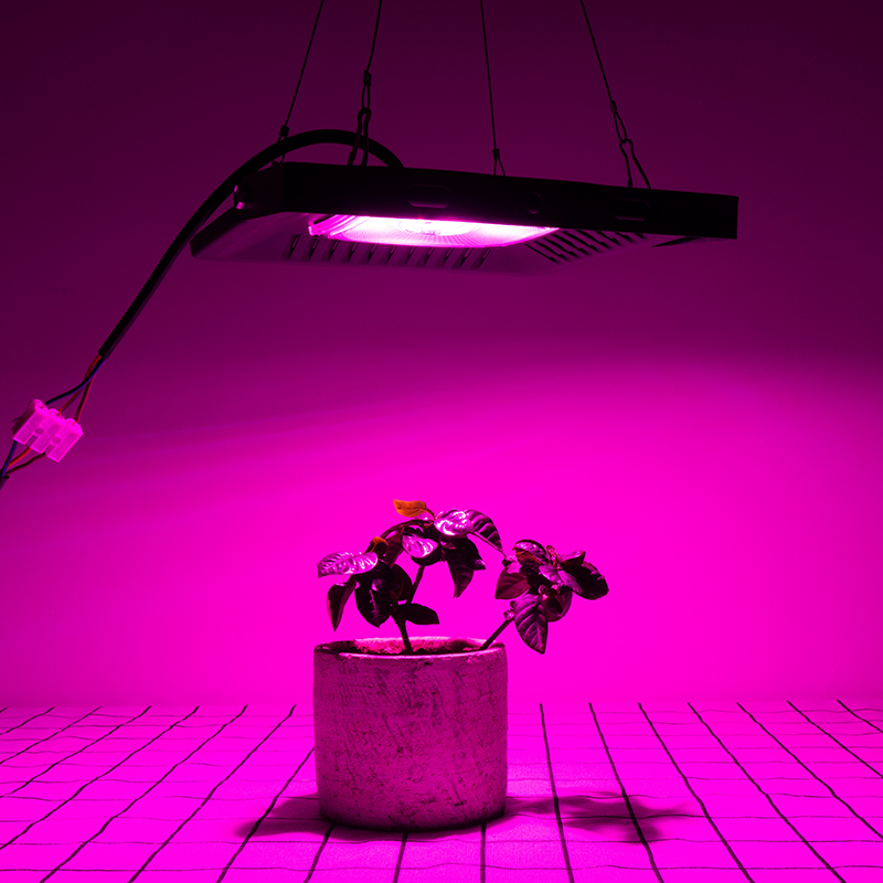 Image 3 - Full Spectrum Lamp LED Growing Light 50W 100W 150W AC 110V 220V High power Outdoor Waterproof for Greenhouse hydroponics seeding-in LED Grow Lights from Lights & Lighting