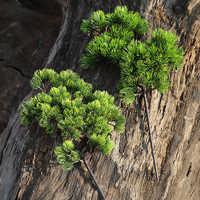1 Uds. 42CM Planta Artificial Rama de pino plantas verdes artificiales de plástico ramas de pino Artificial para la oficina en casa Deor planta decorativa