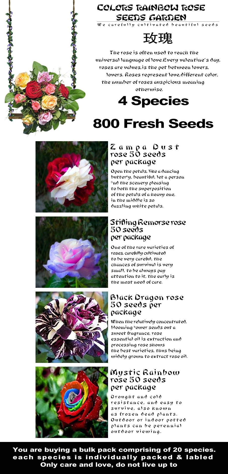 Flower Seeds 4 Different Novel Rose Combinationtotal 800 Pcs Seeds