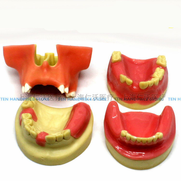 2018 good quality Dental implant training model Oral implant training practice model Maxillary sinus lifting exercises soarday implant