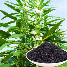 Семена кунжута бонсай садовые украшения саженцы овощей саженцы семян 100шт