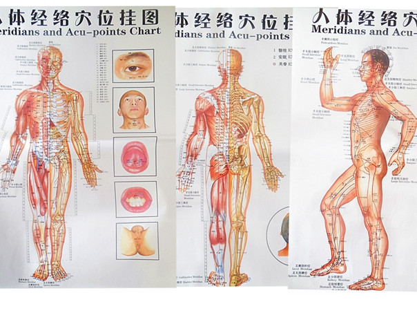 Free Shipping Color Body Acupuncture Points Chart Meridian Three Side