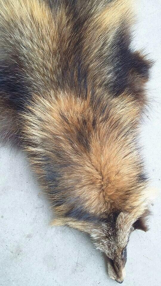 2016 nouvelle chine usine de fourrure de raton laveur en gros vraie peau de fourrure - 3