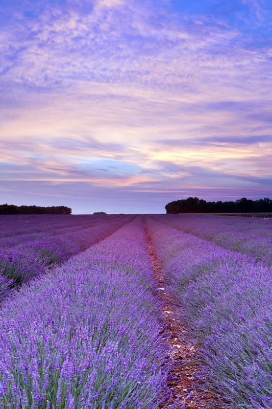 sunset sky white clouds purple field of flowers backdrops Vinyl cloth High quality Computer print wall Background