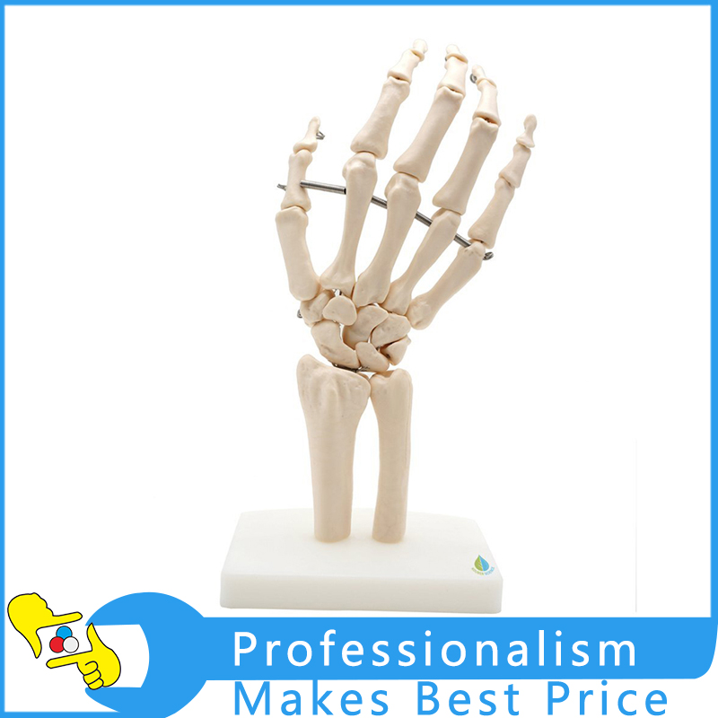 1:1 Size Human Hand Joint Model Hand Skeleton Bone Model Wrist Skeleton Model Medical Science Teaching Supplies dongyun brand human hand model hand skeleton model with ligament medical science teaching supplies