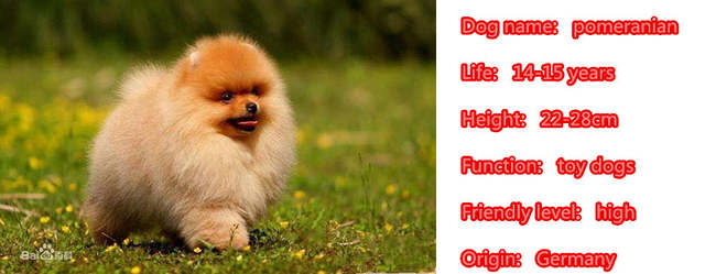 Online Shop 2019 Cute Pomeranian Dog Animal Purse Handbag Charm