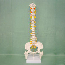 45CM Human Spine with Pelvic Model Human Anatomical Anatomy Spine Medical Model spinal column model+Stand Fexible(China)