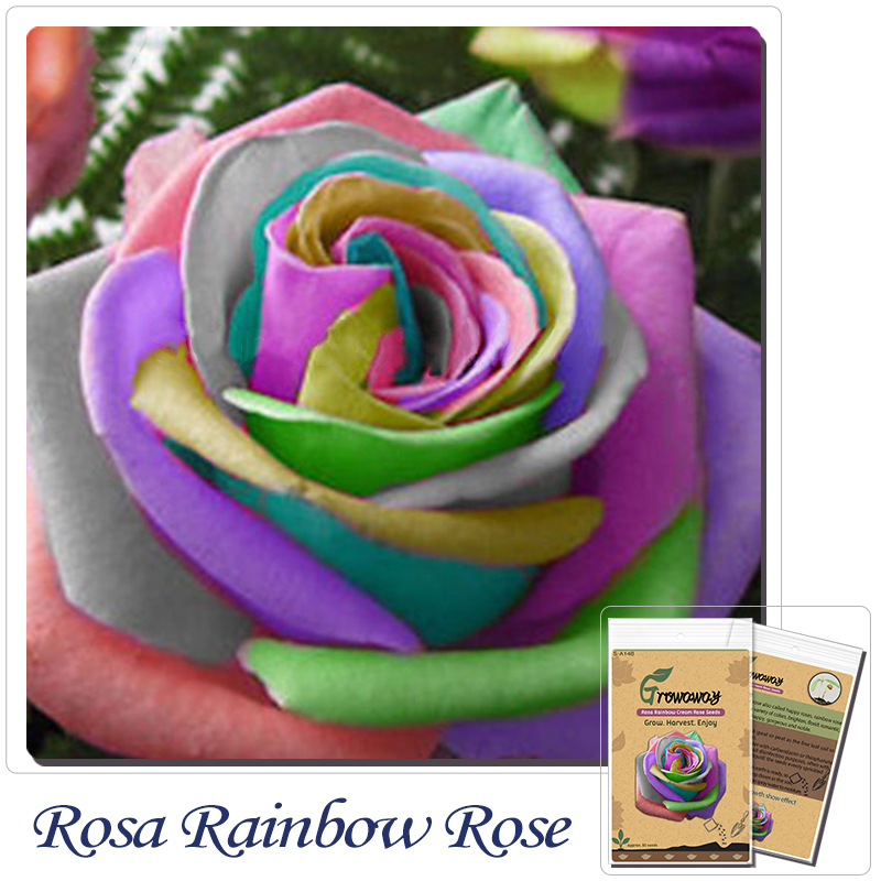 Buy flower seeds bonsai 50 pcs semillas for Buy rainbow rose seeds