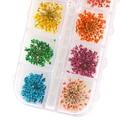 36 unids Hermosa Bienes Seco de Flores Secas Nail Art Stickers Tips Manicura DIY Decoraciones 5VZF 7H5J